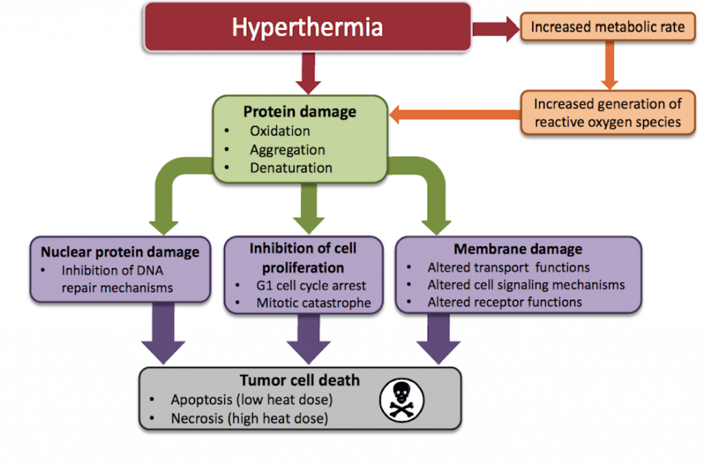 loco regional hyperthermia vancouver cancer clinic