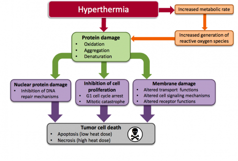 hyperthermia cancer treatment